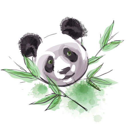 Little panda and bamboo isolated on white background