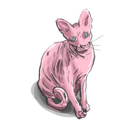 Cartoon sphynx cat on the white background. 向量圖像