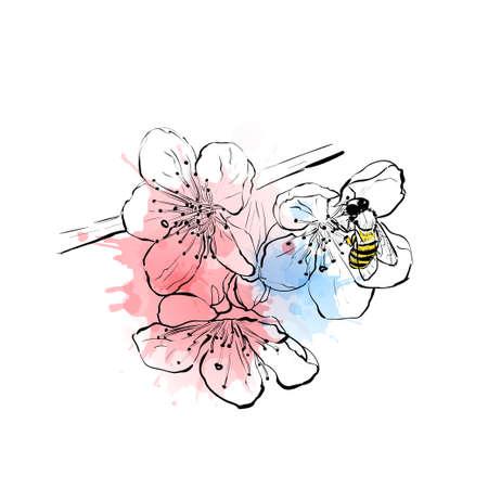 Sakura branch sketch. Bee on the sakura flowers. Vector illustration 向量圖像
