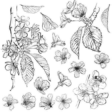 Vector set of spring branches isolated on white background. Sketch flowers