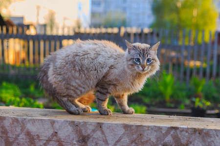 perro asustado: Gato arqueó su espalda asustado perro