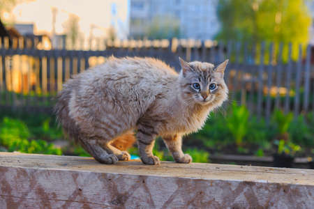 perro asustado: pet cat arched its back frightened dog