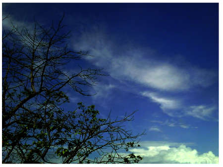 backgraound: beautiful blue sky and autumn trees