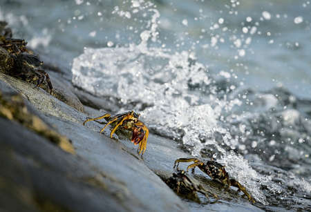 Crabs And A Splash Stock Photo