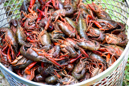 creole: Crayfish Ready to Boil Stock Photo