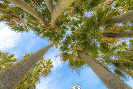 cote d'azure: View from under some Palm trees in Cannes, France