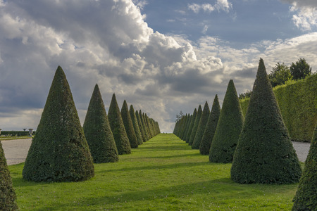 conical hedges lines and lawn, Versailles Chateau near Paris, France