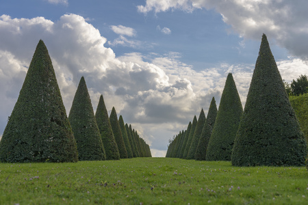 louis the rich heritage: conical hedges lines and lawn, Versailles Chateau near Paris, France