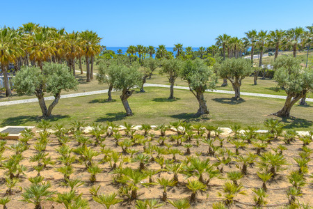 Olive and Palm trees in Portugal Imagens