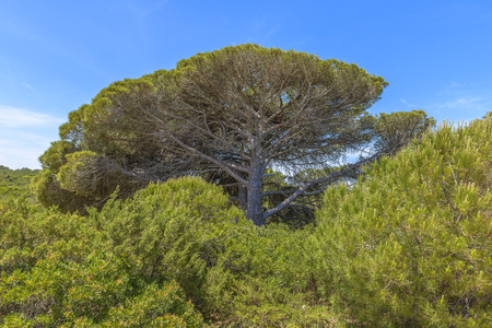 Beautiful tree in a sunny day in Algarve, Portugal 版權商用圖片