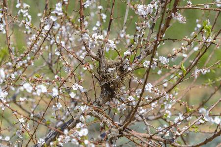 Abandoned bird Nest on a tree.