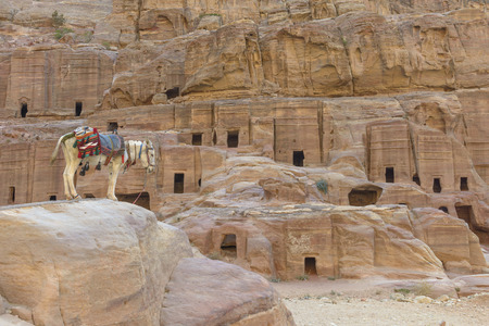 Donkey by the Ancient houses in Petra, Jordan.