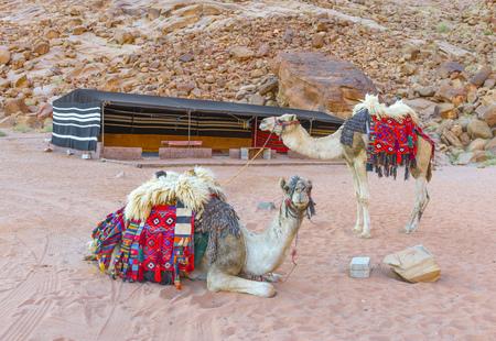 Kamelen in de woestijn van Wadi Rum, Jordanië Stockfoto - 35597151