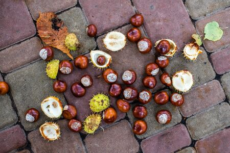 Many chestnut fruits lie on the ground. Yellow and green leaves. Chestnut Alley. Red-brown nuts. Imagens - 133378407