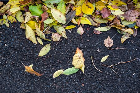 Autumn fallen maple leaves on asphalt, yellow, green. Stock horizontal photo for banner, background. Stock Photo