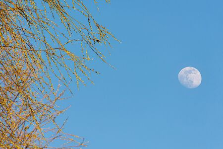 Big moon in the blue sky, A Blur Branch in The Foreground Imagens - 147012453
