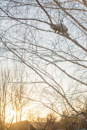cat on a tree at sunset Imagens