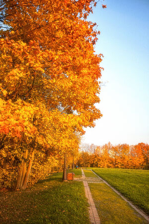 Golden leaves on branch, autumn wood with sun rays, beautiful landscape photo