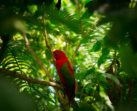 Exotic parrot with red head in jungle Stock Photo