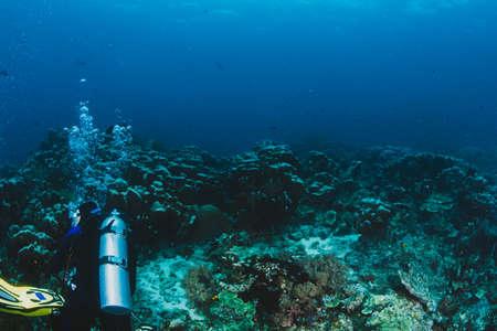 Scuba diver explore a coral reef Stock Photo