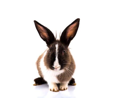 Rabbit isolated on a white background Standard-Bild