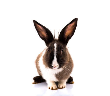 Rabbit isolated on a white background Banco de Imagens