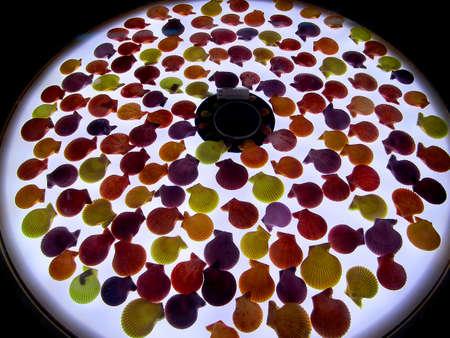 colorful light display: Colorful shells display