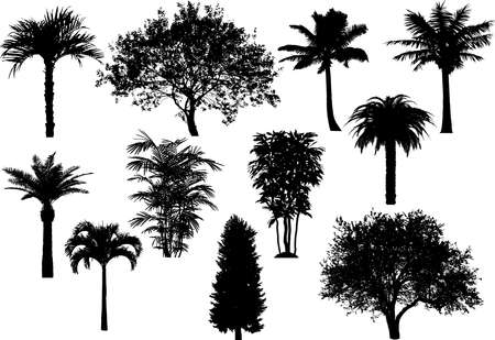 Tree's silhouette collection