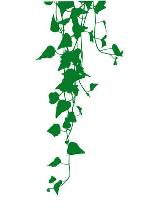 Ivy leaves silhouette illustration.