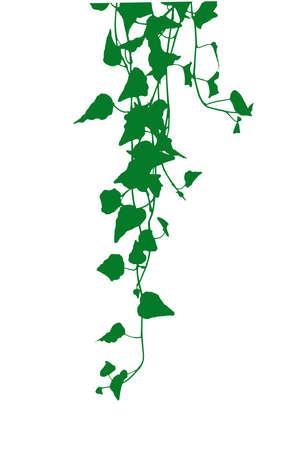 Efeu Blätter Silhouette Illustration Vektorgrafik