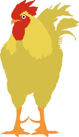 Illustration of cockrooster. Illustration