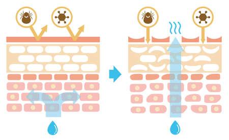Vue en coupe de la comparaison sin.comparison illustrant l'effet de protection entre une peau saine et une peau blessée. Pas de texte. Vecteurs
