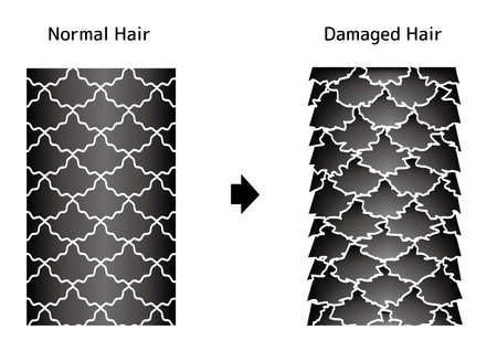 Comparison illustration of healthy hair and damaged hair. Illustration