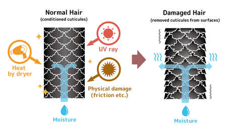 Comparison illustration of healthy hair and damaged hair. No text.