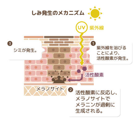 Mechanism of skin pigmentation
