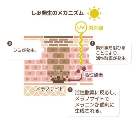 Mécanisme de pigmentation cutanée