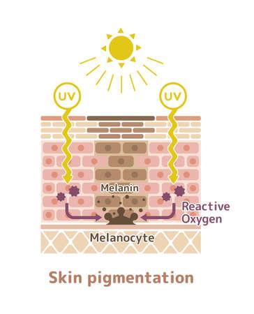 Mechanism of skin pigmentation Stock Vector - 99140256