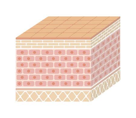 Schicht der menschlichen Haut Illustration