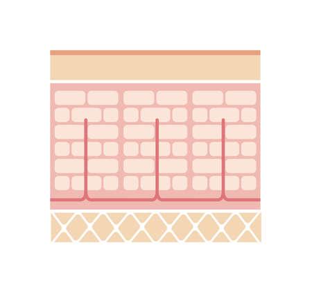 Normal skin illustration (No text) Illustration