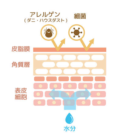 Sectional view of the skin. Healthy skin illustration (japanese) Ilustração
