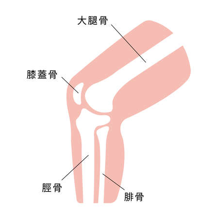 Knee joint section flat illustration