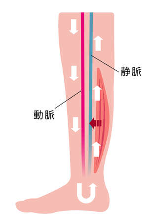 Cause of swelling (edema) of the legs. Flat illustration of normal leg Illustration