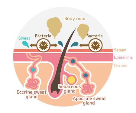 Cause de l'illustration plate de vecteur d'odeur corporelle (forme ronde)