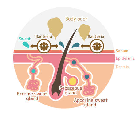 Cause of body odor vector flat illustration (round shape)