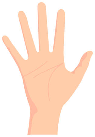 Female hand gesture (hand sign) vector illustration  open hand