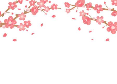 Cherry blossoms background illustration ( spring season theme )