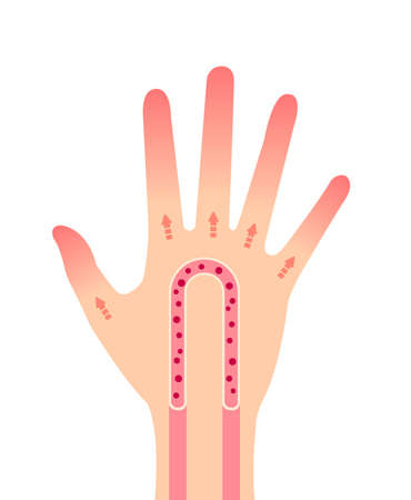 Normal hand blood circulation illustration / no text Stock Illustratie