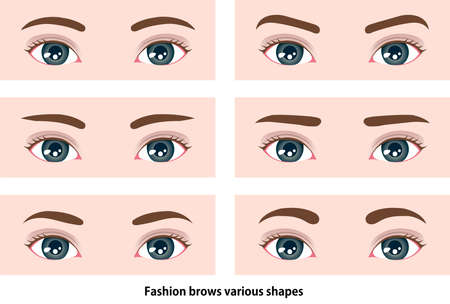 Female eyebrows various shapes vector illustration