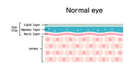 Cross section of normal eye surface. flat vector illustration Ilustracja