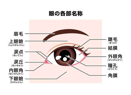 Structure of human eye ( names of parts ) vector illustration / Japanese